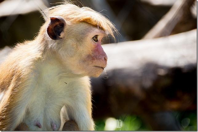 ときわ動物園、猿のお母さん