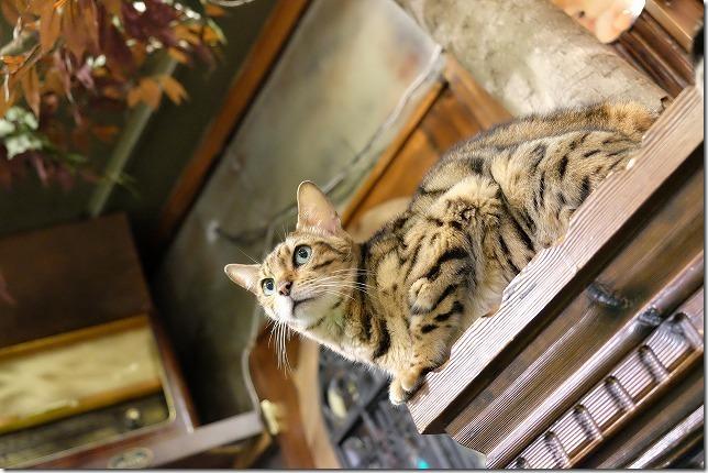 湯布院、猫カフェ