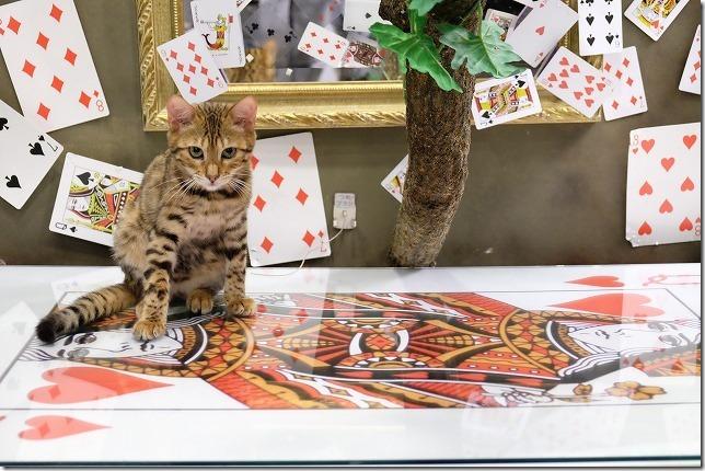 湯布院、猫カフェの子猫