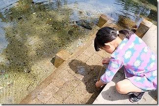 別府弁天池の青い水と子供