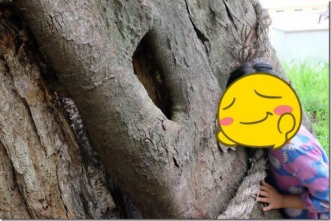 弁天池の大樹