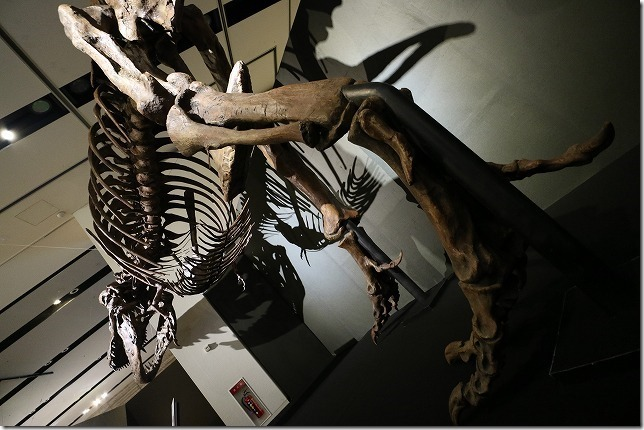 いのちのたび博物館、恐竜博ティラノサウルス