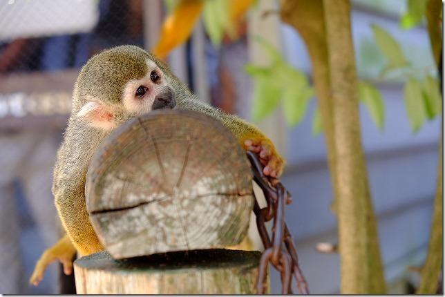 大牟田動物園の、のほーんなリスザル