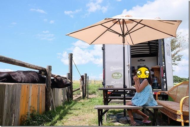 とうもろこしと子供と牛