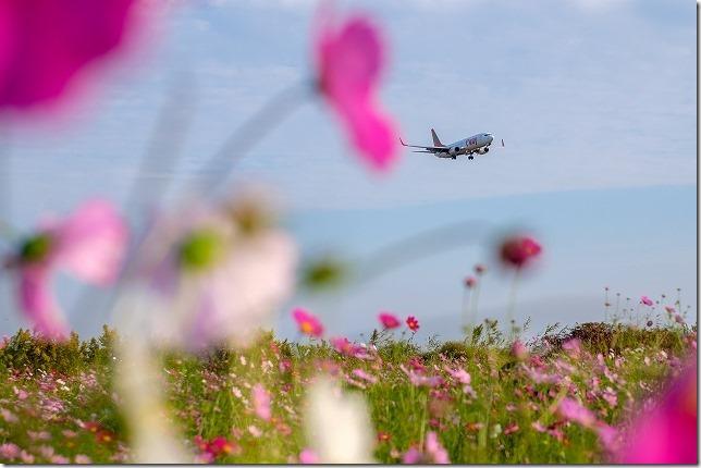 佐賀空港のコスモス畑と飛行機