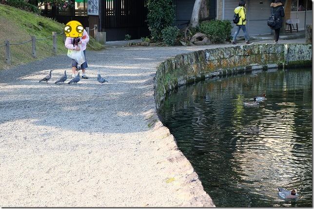 水前寺公園でハトの餌やり
