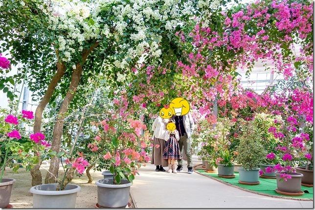 ブーゲンハウス嬉野で満開の花で記念写真