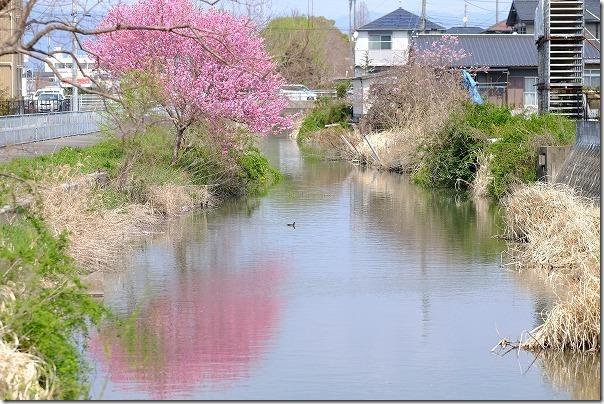 佐賀、徐福サイクリングロード沿いの花