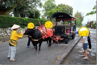 出水の武家屋敷を牛車で巡る(予約・コース・料金・食事など)