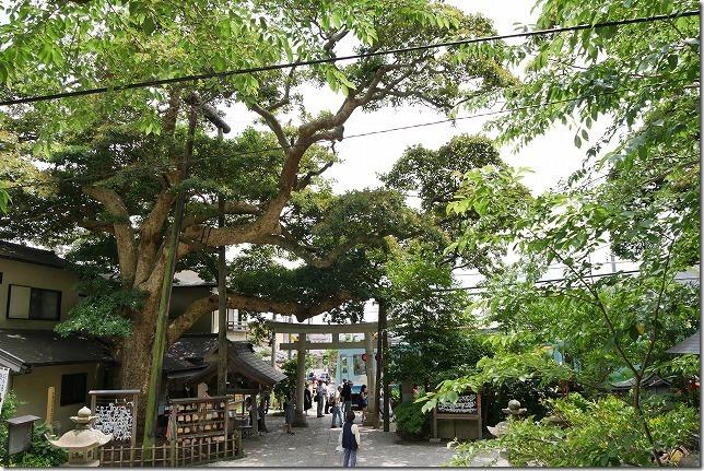 御霊神社の境内と江ノ電