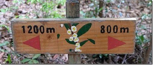篠栗九大の森の蒲田池を散策2K