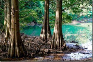 篠栗九大の森 ジブリの森を散策(駐車場・地図・アクセス)