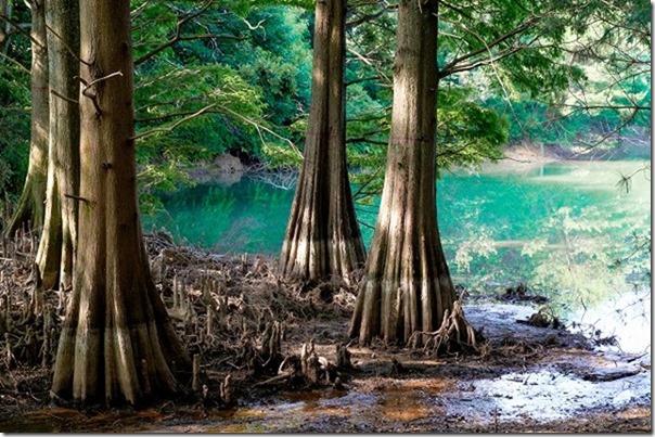 篠栗九大の森、ジブリの「もののけ姫」の森