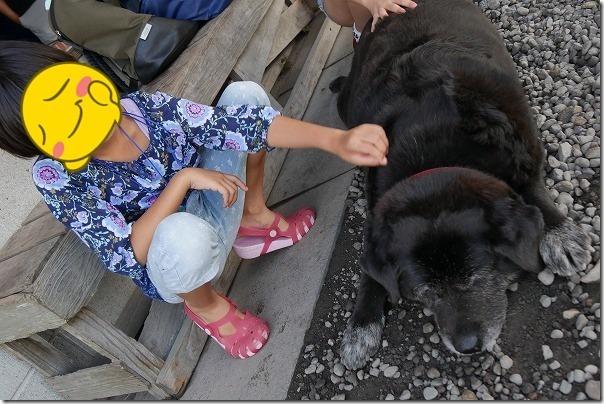 地蔵原釣り堀センターの看板犬