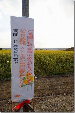 柳川ひまわり畑のひまわり持ち帰り自由