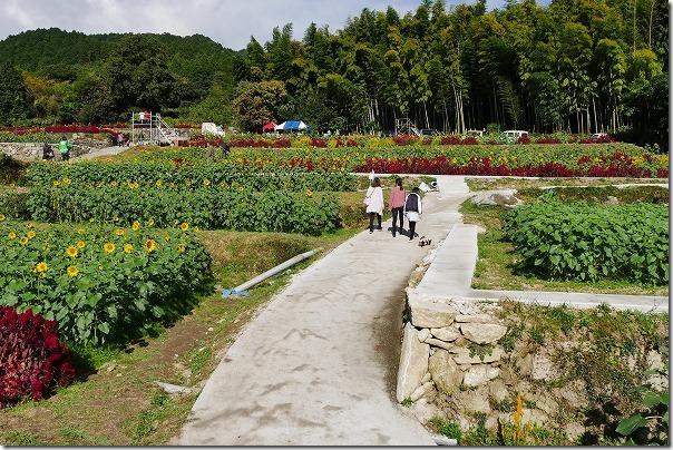 佐賀県みやき町の山田ひまわり園,散策