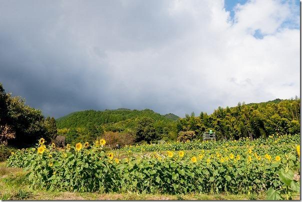 山田ひまわり園