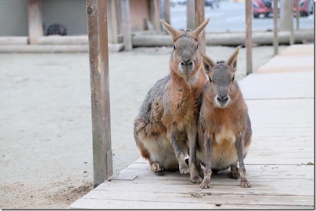 トリアス久山、触れ合い動物園のマーラ