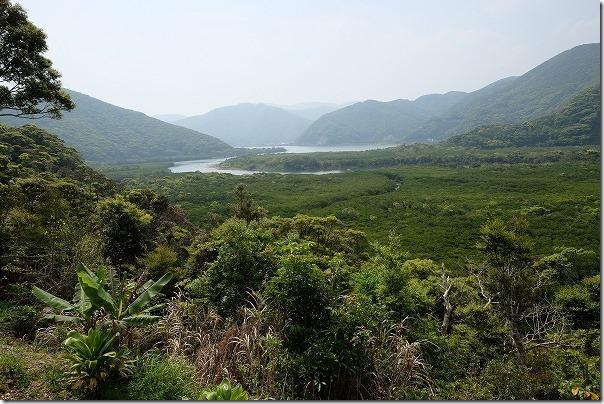 奄美大島、マングローブ展望