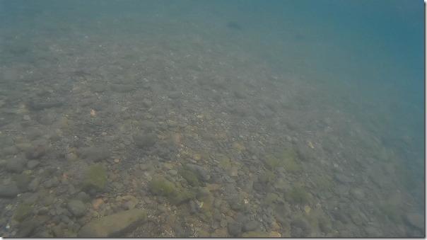 奄美大島、マングローブカヌーで水中カメラ