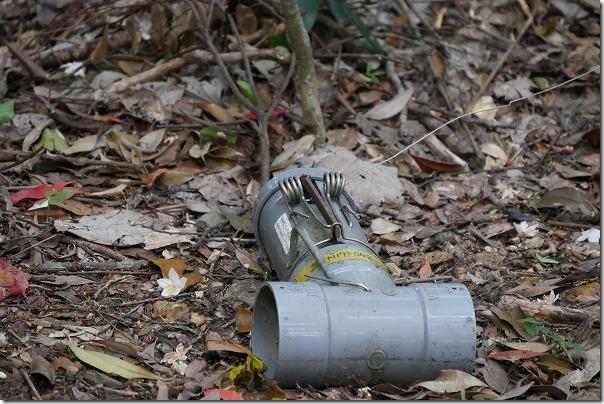 金作原原生林のマングースの罠