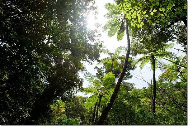 金作原原生林の光景