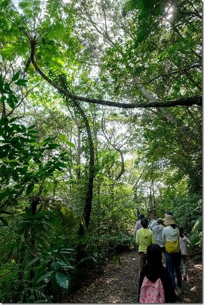 金作原原生林を散策