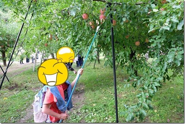三瀬「まるじゅんりんご園」のリンゴ狩り