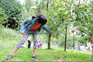 三瀬 りんご狩り まるじゅんリンゴ園(4種類のりんごを食べ比べ)