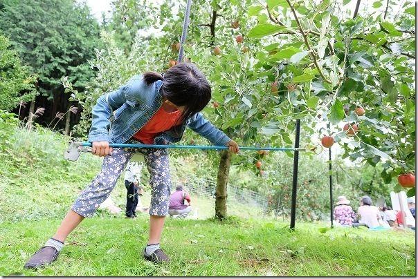 佐賀市三瀬村にある「まるじゅんりんご園」へりんご狩りへ