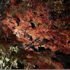 紅葉の綺麗な金色温泉(大分県中津市)