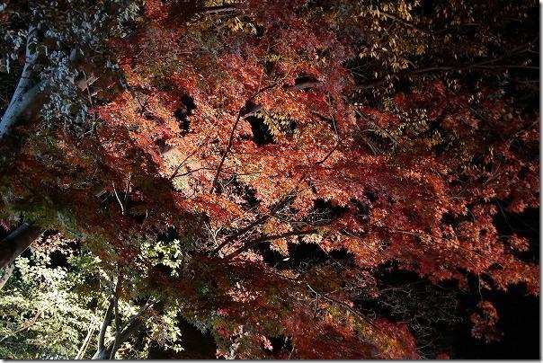 金色温泉の紅葉
