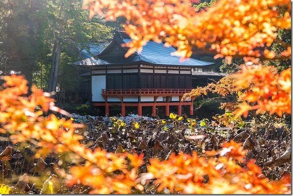 宇佐神宮の境内の紅葉、蓮池