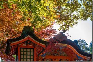 宇佐神宮の秋と紅葉(大分県宇佐市)