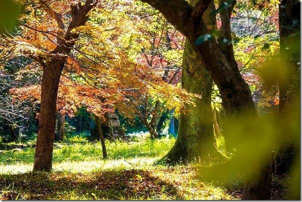 宇佐神宮の境内の紅葉