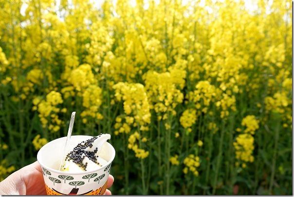 菜の花ソフト,長崎鼻