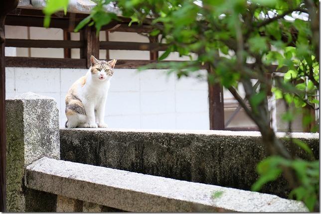 御袖天満宮の境内の猫