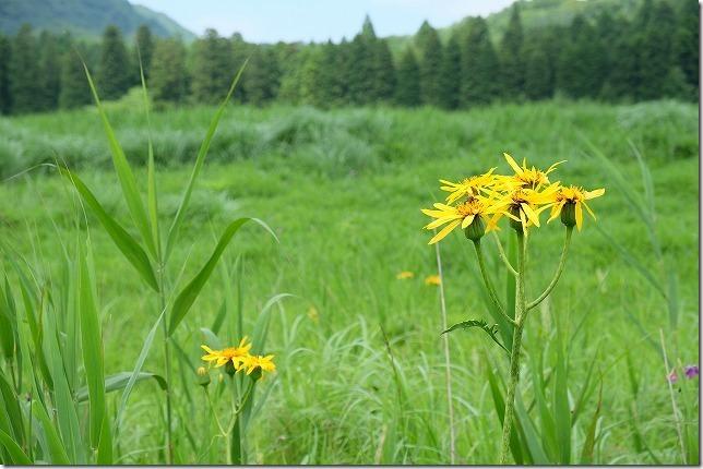 猪の瀬戸湿原の花