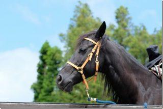 「くじゅう」で子供の乗馬体験 エル・ランチョ・グランデ(料金・コース)