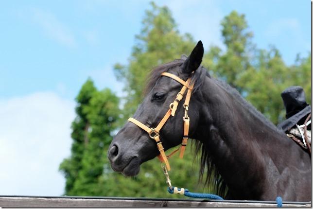 「くじゅう」エル・ランチョ・グランデで乗馬体験