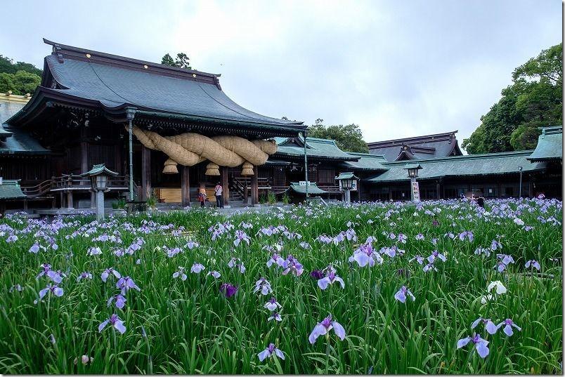 宮地嶽神社の境内の花菖蒲