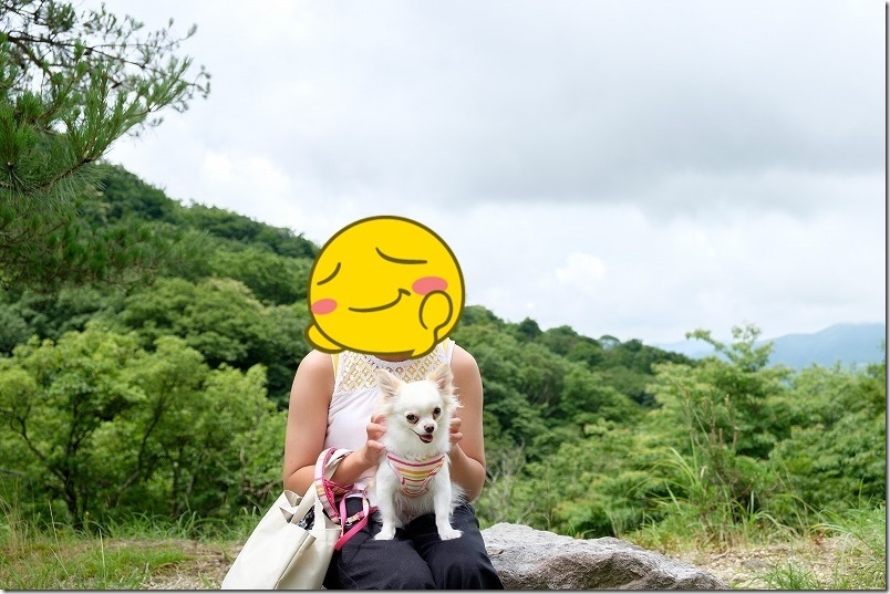 こむぎ(チワワ・犬)は塚原高原の風にあたりつつ待ち