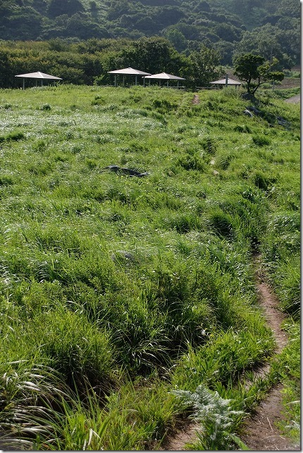 平尾台、茶ヶ床園地から散策