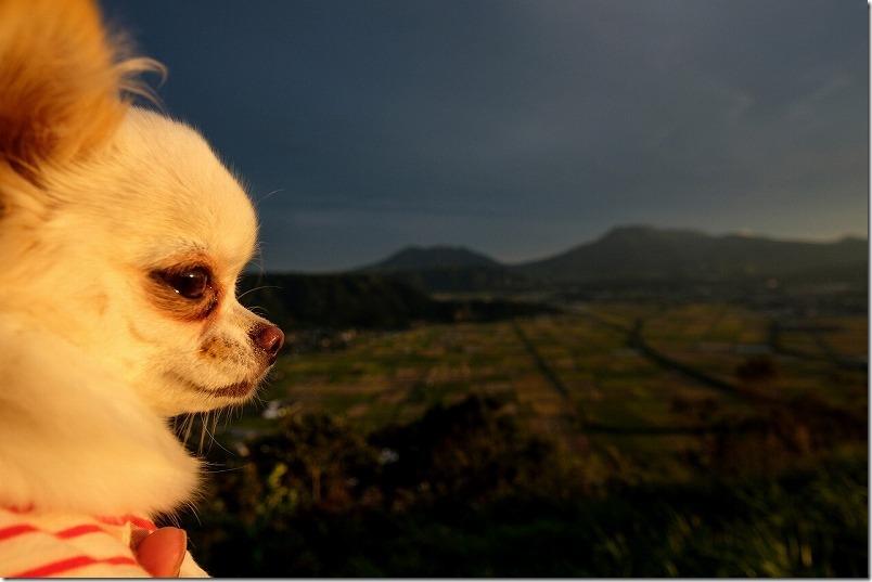 阿蘇「城山展望台」からの展望と犬