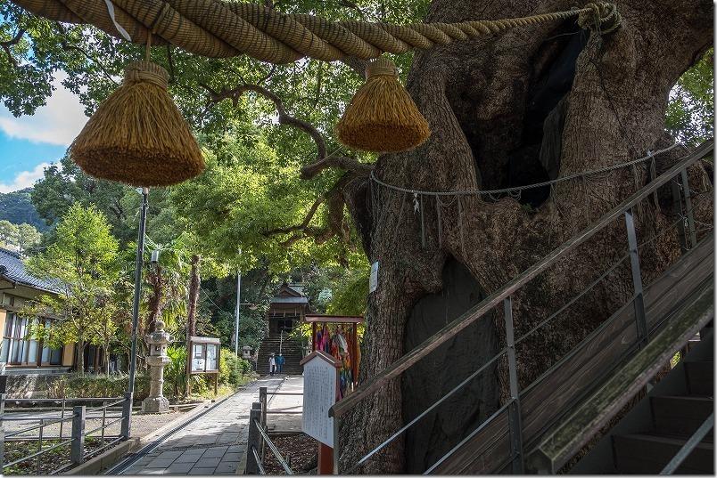 山王神社の大楠、境内