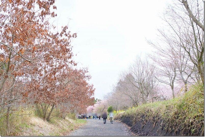 長湯温泉、枝垂れ桜の里の駐車場から桜まで歩く