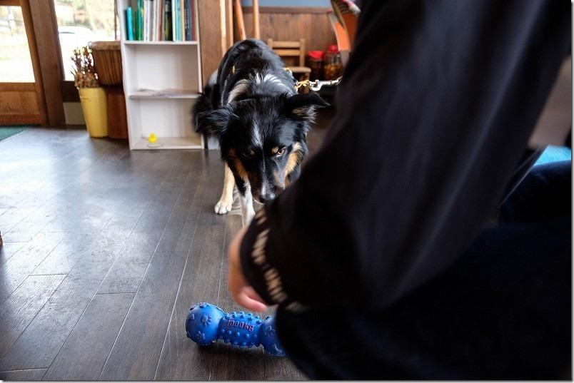 長湯温泉ジプシースマイルカフェの看板犬テラくん