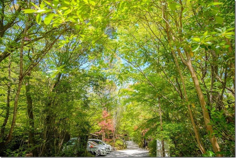 大分県日田市の琴平温泉の新緑