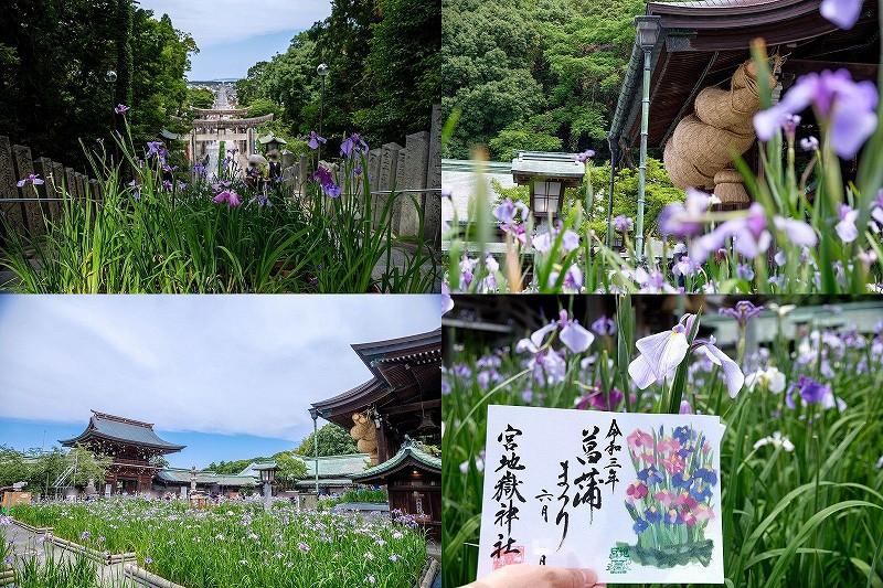 宮地嶽神社の菖蒲祭り