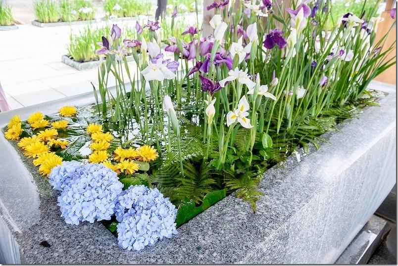 宮地嶽神社、花手水にも菖蒲と紫陽花